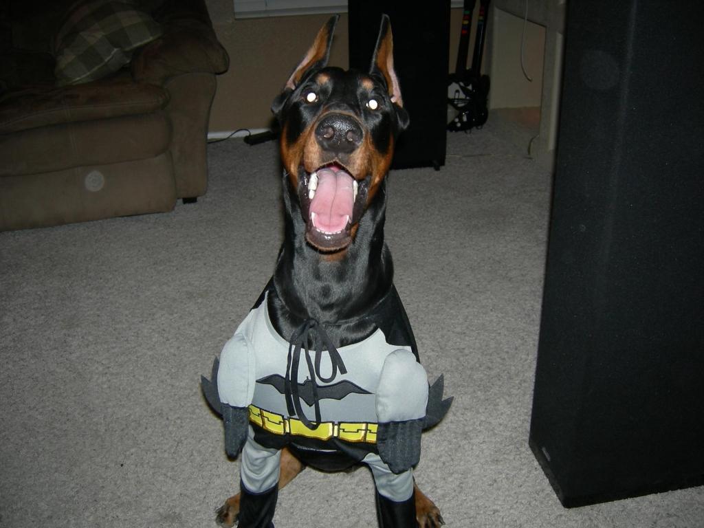 Batman to the rescue!