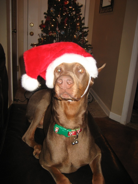 Bella in Her Christman Hat