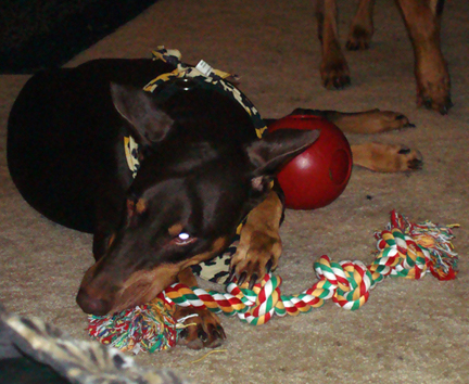Cleo Hoarding The Toys
