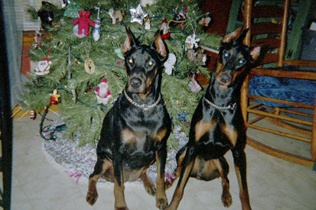 Dar & Sasha at Christmas