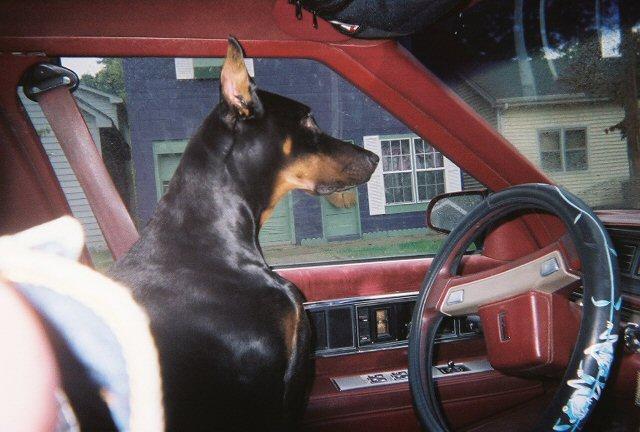 Dar in the Car