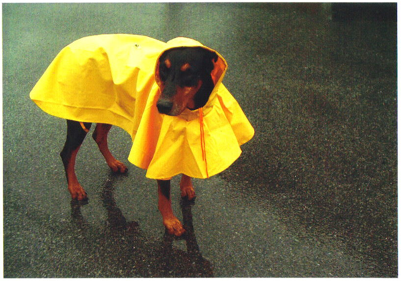 Dax The Morton Salt Dog