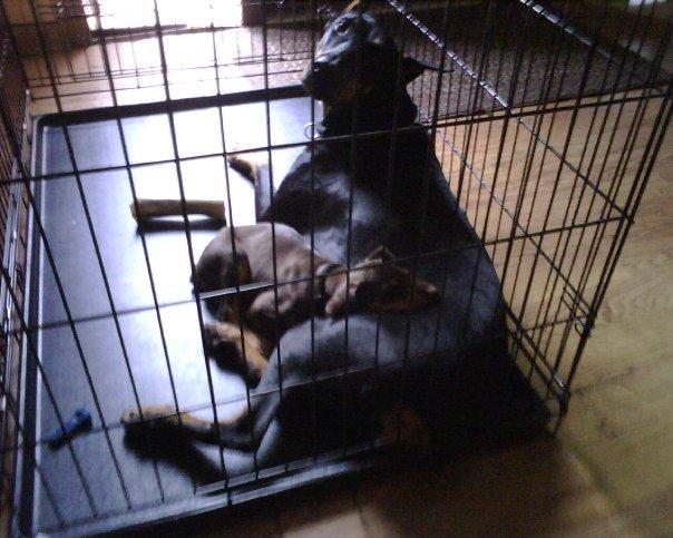 Dayna And Her New Buddy Sasha