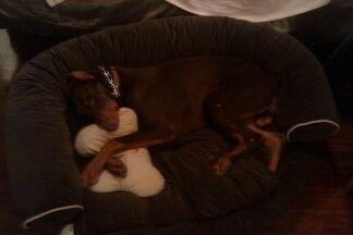 Dexter Cuddling His Pillow In