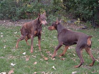 dogs-oct2007