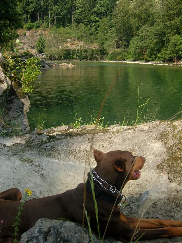 Duke By Water