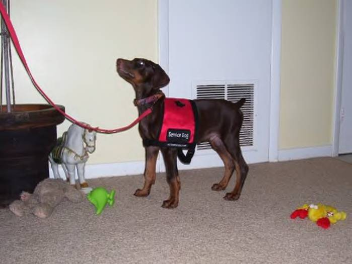 Ezra-training Vest