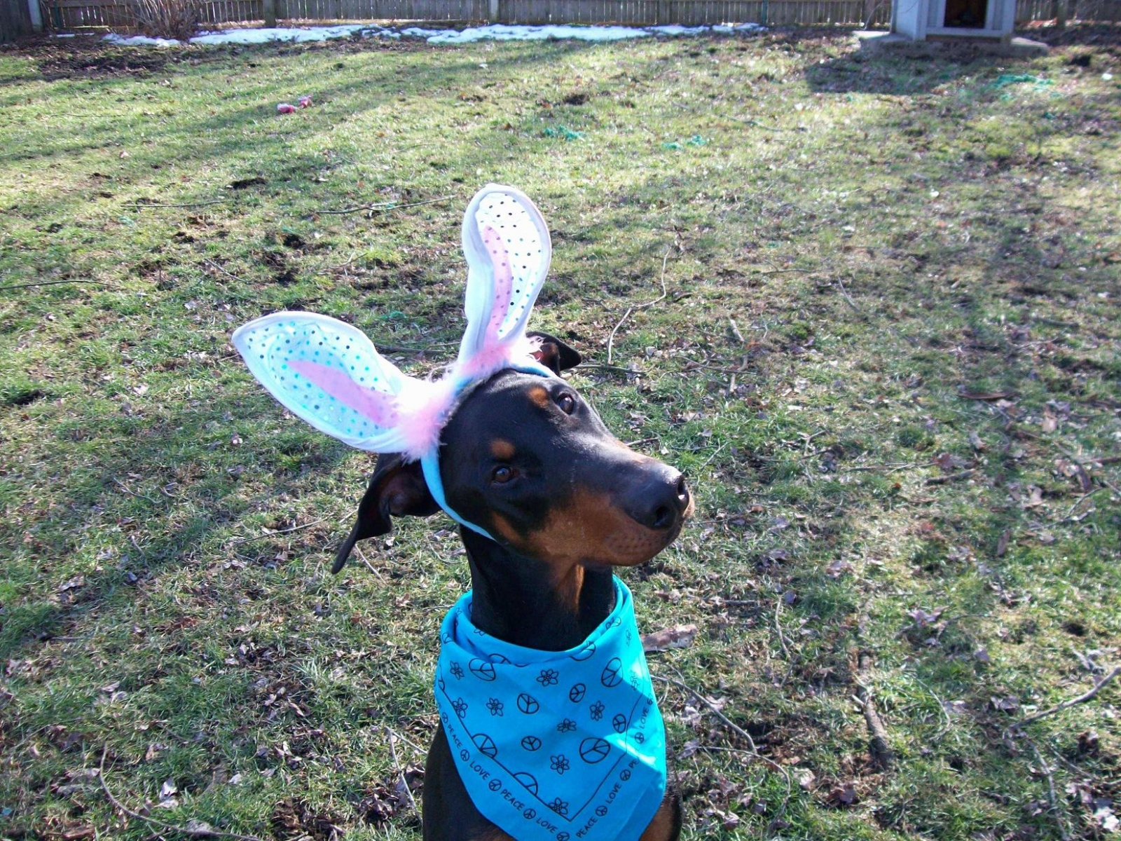 Havi - My Funny Bunny
