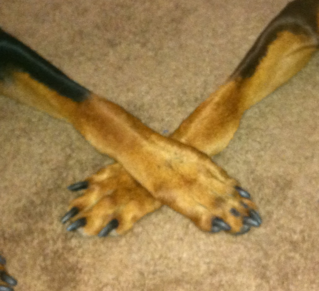 Holding Hands, Er, Paws