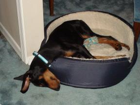 Indy Aka Slinky Pup
