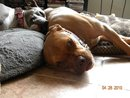 Kiyah And Boomer (foster Dog)