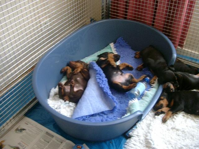 let sleeping dogs lie!!