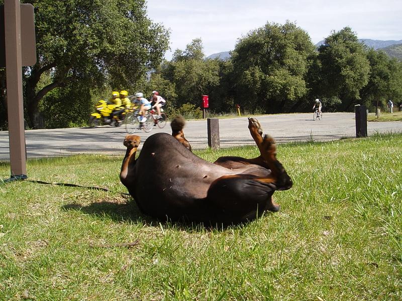 Mensa At The Bicycle Races, '0