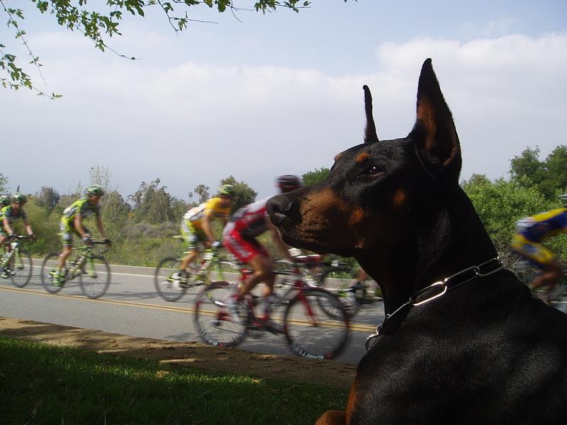 Mensa At The Bicycle Races