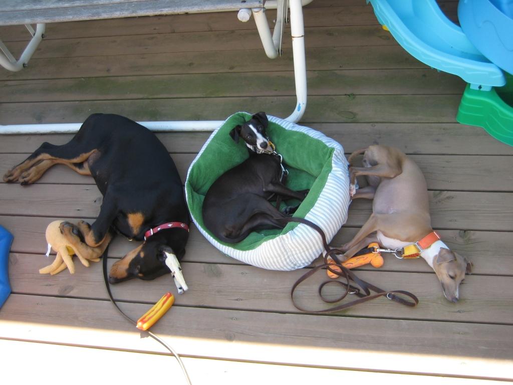 Mona, Jack, And Layla