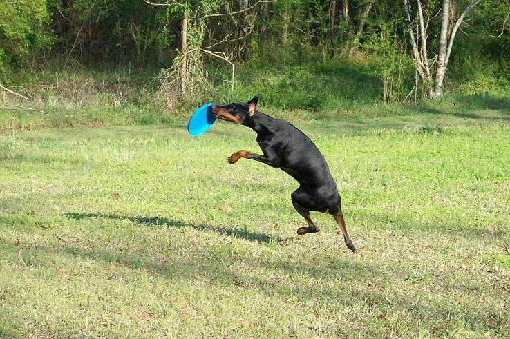 More Frisbee