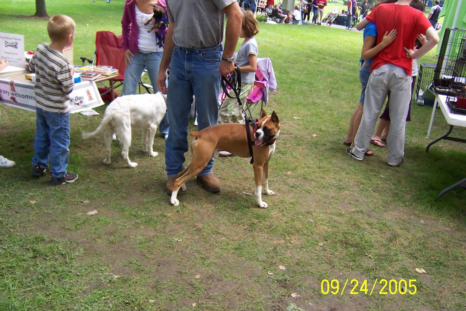 obelin doggies