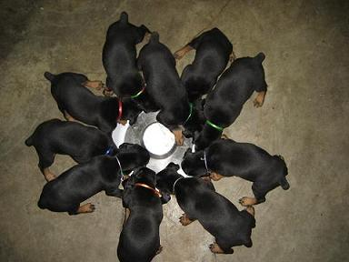 One Of These Pups Is All Mine!