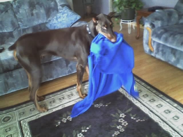 Phoenix And His Blanky