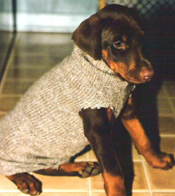 Pup Sweater250