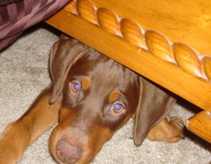 Puppy Akasha