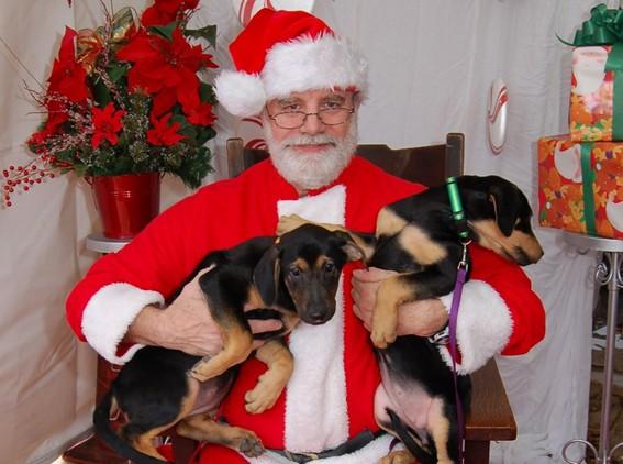 Pups With Santa