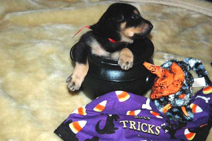 Red Pup's First Halloween