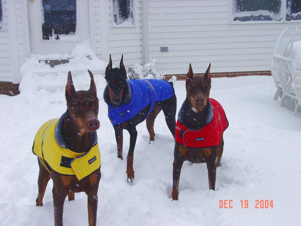 Riggs, Malley and Chessie