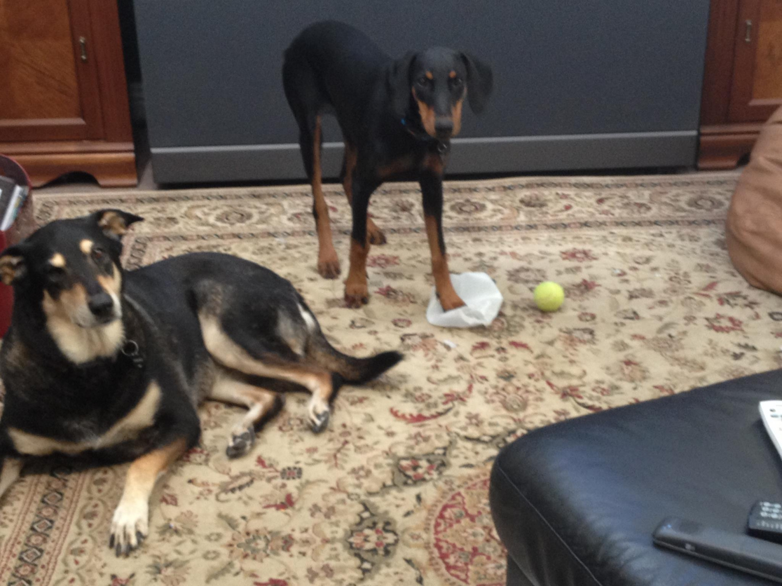 Roxie & Murphy