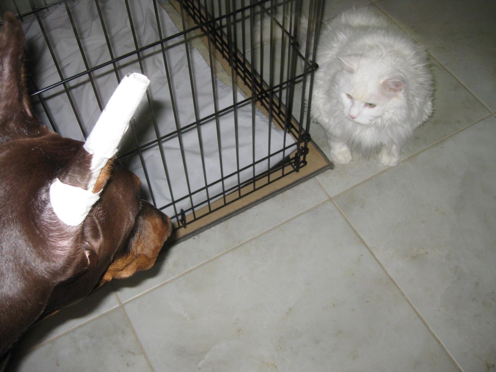 Sammy And Charlie