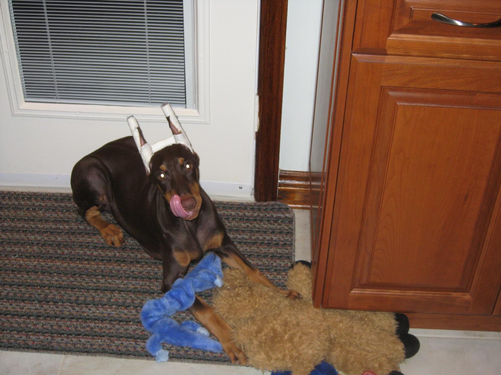 Sammy Loves Stuffies