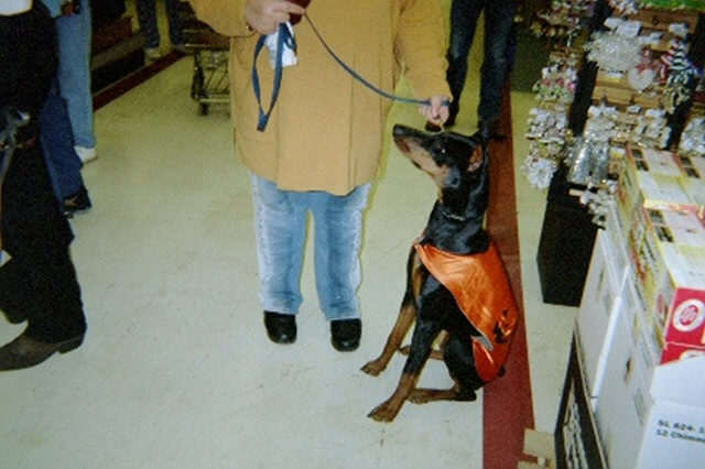 Sasha at the Dog Halloween Par