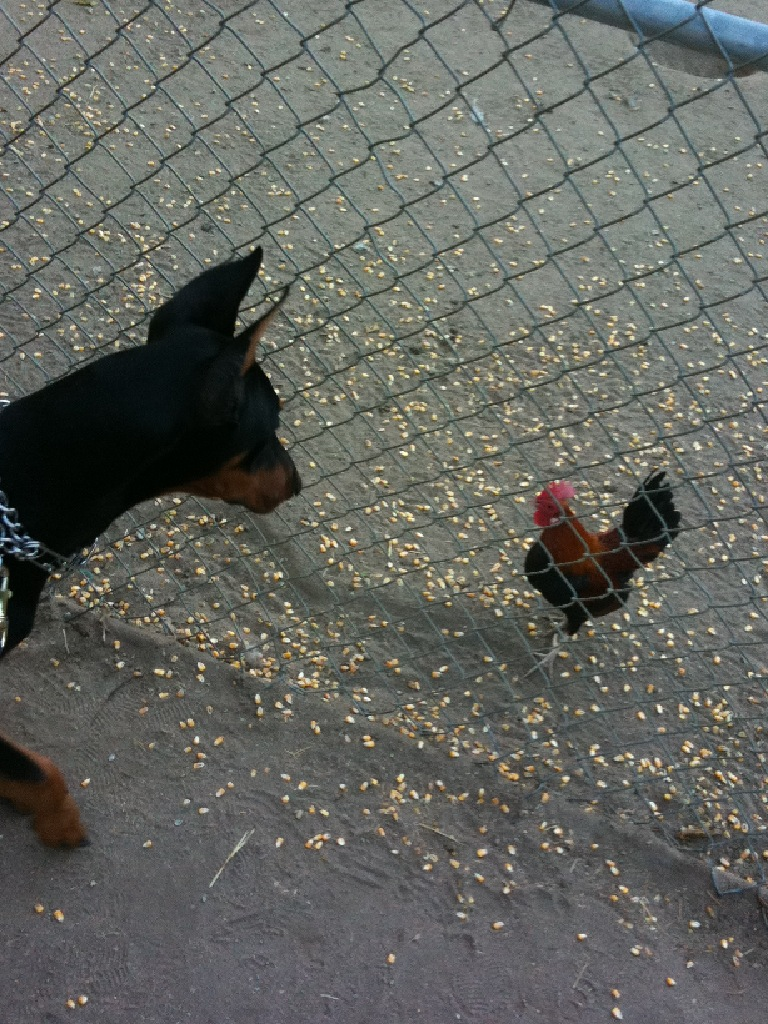Shaka Goes To The Farm