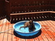 Storm in her wading pool