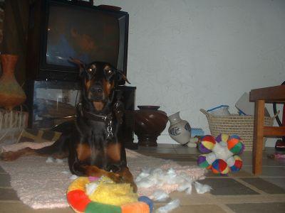 Stuffie killer!
