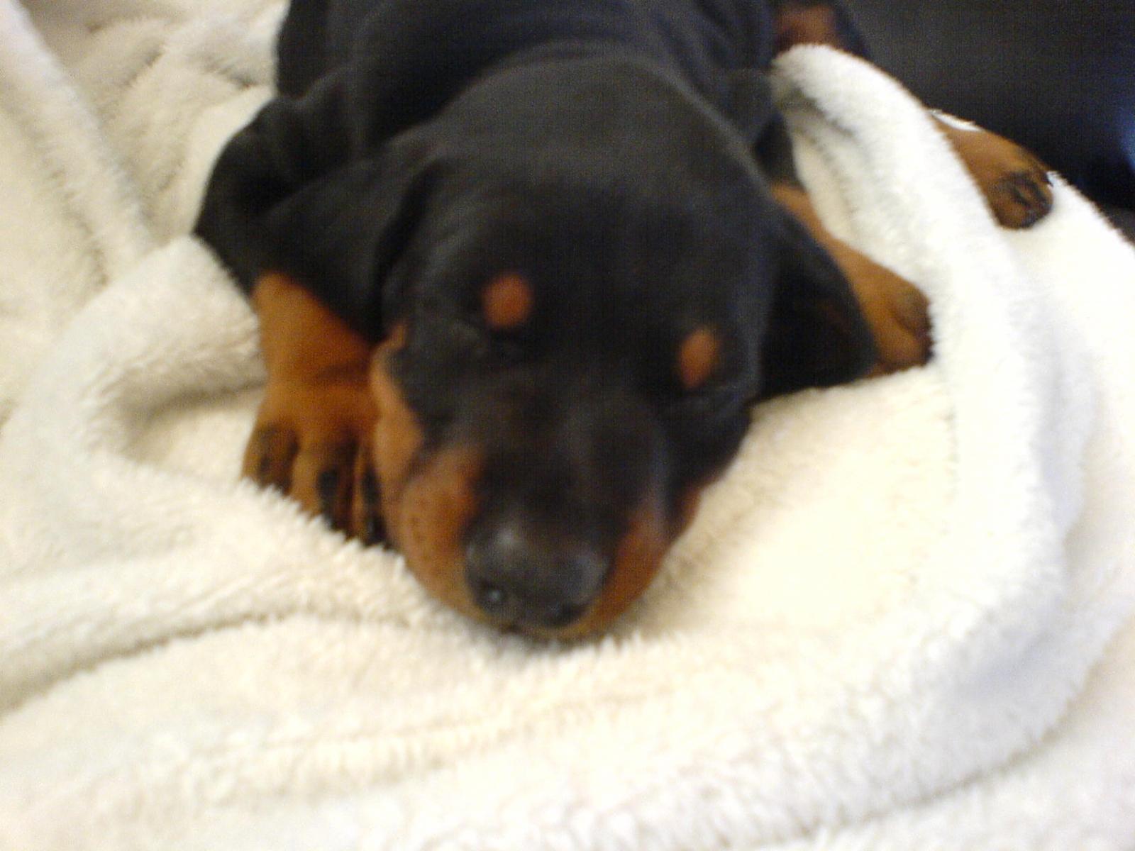 Tired Baby Oscar