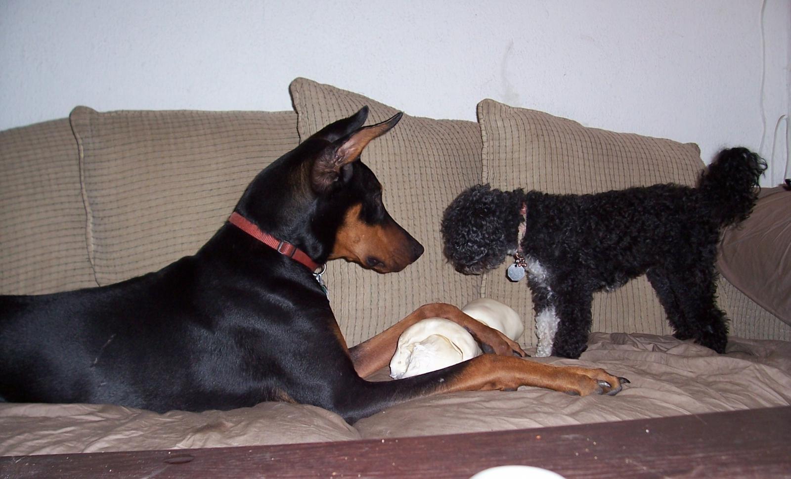 Winston & Sasha