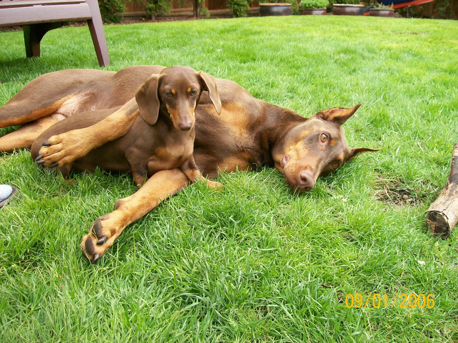 Zena & Lola