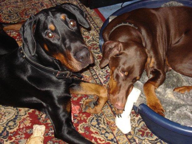 Zeus And Missy