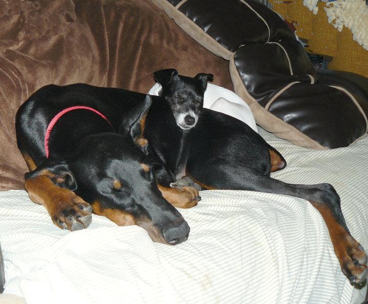 Ziva And Lucy